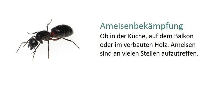 Ameisenbekämpfung
